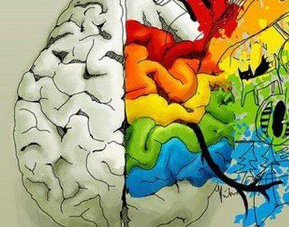 Los hemisferios cerebrales